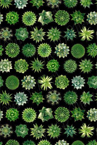 Cactus succulent towel
