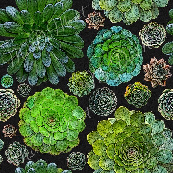 Aeonium Garden