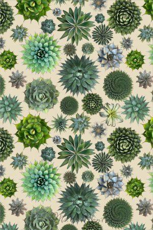 spiky succulent cactus towel