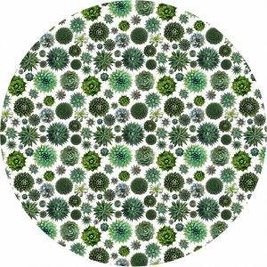 succulent cactus tablecloth
