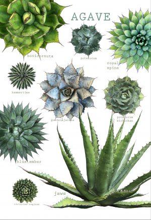 Agave Botanical cactus towel